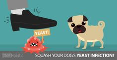 Does your dog have itchy skin? Recurrent hot spots or gunky ears? Does she lick and chew at her feet? Not all skin issues are caused by allergies and in many cases, the cause of your dog's itchy skin can be found in her gut.