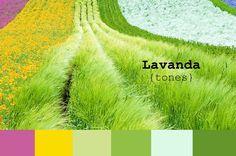 paleta de colores Color Lavanda, I Have No One, Splendour In The Grass, Spring Garden, Cactus Plants, Patio, Colours, Grasses, Colour Palettes