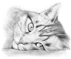 auf deviantART - Animals in Pencil - Katzen, Cat Funny Pencil Drawings Of Animals, Animal Sketches, Art Drawings Sketches, Cute Cat Drawing, Realistic Cat Drawing, Drawing Ideas, Cat Tattoo Designs, Cat Coloring Page, Cat Sketch