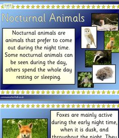 Nocturnal Animals, During The Day, Pre School, Night Time, Coming Out, School Ideas, Activities