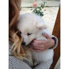 寂寞 ❤ liked on Polyvore featuring animals, pictures, pets, fillers and icon pictures
