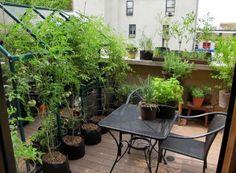 back-terrace-w--greenhouse