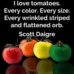 I love #tomatoes. Every color. Every size. Every wrinkled striped and flattened orb. Scott Daigre  #quote