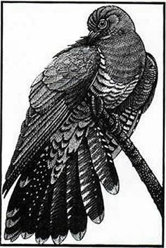 Cuckoo II  by Colin See-Paynton