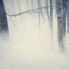 #snow #winter #woods #birch #trees