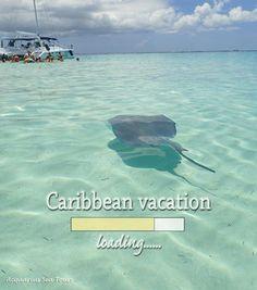 Stingray kisses approaching rapidly ..... Stingray City Grand Cayman