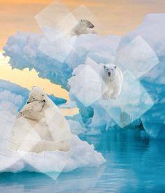 Arctic @Bazaart