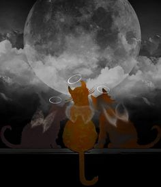Final Act of Rescue - Rainbow Bridge Poem Crazy Cat Lady, Crazy Cats, Gato Angel, Animals And Pets, Cute Animals, Pet Loss Grief, Gatos Cat, Cat Heaven, Victorian Angels