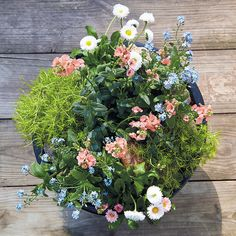 Tabletop Planter Ideas: These tabletop planters may be small, but their colorful flowers and foliage can make a big impact on your outdoor living area. Best Plants For Shade, Shade Plants, Cool Plants, Edible Flowers, Colorful Flowers, Planter Ideas, Planters, Kalanchoe Blossfeldiana, Bellis Perennis