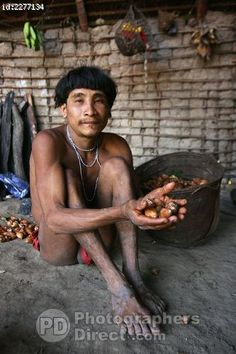 A Yanomami man holding 'abiu  fruits', a common food for the tribe. The forest dwelling tribe live in the Amazon rainforest on both sides of the Brazilian /Venezuelan border along the Orinoco.