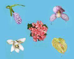 Image result for petrina hicks flowers