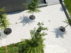 Dirtworks Landscape Architecture   Simons Center for Geometry and Physics   Gingko grove (Gingko biloba) within geometric Penrose paving pattern