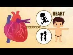 Learn about Human Body Parts For Kids - HEART