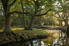 Forest river at Ober Water, New Forest National Park, Hampshire, England Stock Photo Autumn Forest, New Forest, Forest River, Dark Forest, Hampshire England, Magic Forest, Nature Pictures, Great Britain, Landscape Photography