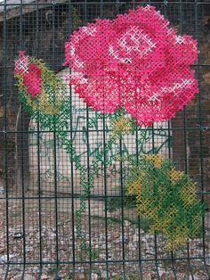rose outdoors art outside
