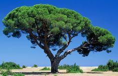 baziastrology: Az elemek aspektusai - A Jang Fa Water, Plants, Outdoor, Passport, Trees, Gripe Water, Outdoors, Tree Structure, Plant