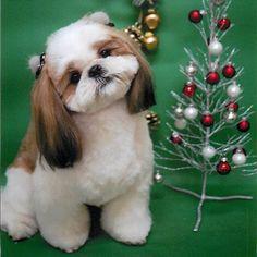 Me and my Christmas tree - Merry Christmas.