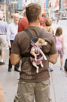 This poor dog, she would enjoy the walk.. why on earth would he wear her like this?..