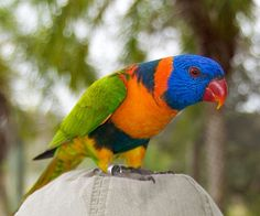 ABCs of Animal World: Favorite Pet Birds: World's Most Sougth Parrot Species