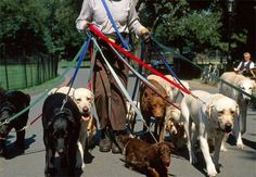 The ultimate dog walker! #NewYorkCity #NYC #DogsofNY