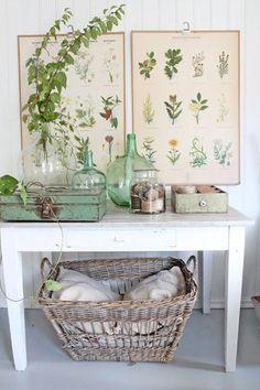 Dame jeanne, green, vert, herbes, vintage, plantes anciennes