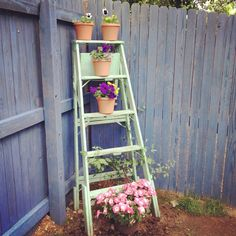 Repurposing old stuff. Like this ladder that we found at a Longmont yard sale for $5. This chipped and shabby chic paint job is for reals, straight out an old man's garage, and not done with fancy paints and techniques. We used it as a creative plant stand outside, but the possibilities are only limited by your creativity.