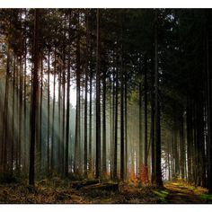Amazing Autumn Forests (15 photos) found on Polyvore