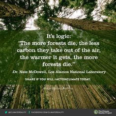 It's logic: The more forests die, the less carbon they take out of the air, the warmer it gets, the more forests die.