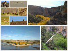 Escapada Rural en Sepúlveda: #aves Turismo ornitológico cerca de #Sepúlveda #bi...