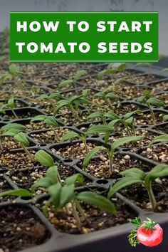 Growing tomatoes from seed is something anyone can do. It may seem intimidating, but you can surely grow your own tomatoes from seed. Indoor seed starting is the best way to start tomato seeds. Find o Vegetable Garden For Beginners, Backyard Vegetable Gardens, Container Gardening Vegetables, Gardening For Beginners, Garden Landscaping, Gardening Hacks, Gardening Supplies, Garden Container, Gardening Quotes