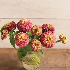 Zinnias - Queen Red Lime