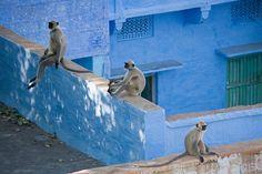 인도 라자스탄 '조드푸르'