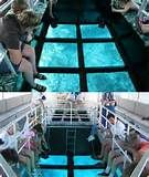... Fort Myers to Key Largo Snorkeling or Glass Bottom Boat Rides Tours
