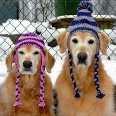 Reasons To Be Thrilled It's Finally Almost Winter It really IS the most wonderful time of the year. Animals in people hats. :))