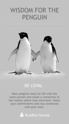 All About Penguins, Cute Penguins, Penguin Pictures, Funny Animal Pictures, Word Pictures, Cute Pictures, Penguin Quotes, Penguin Party, Penguin Craft