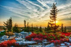 Dolly Sods Wilderness encompasses 17,371 acres within over 32,000 acres of forest. Description from stevetaboneblog.com. I searched for this on bing.com/images