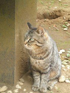 江の島に住むネコちゃんです。