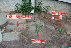 """Another pinner said, """"***worked well, only I need to use a waterer with a thinner stream***""""The Easiest Way to Get Rid of Weeds Without Harsh, Synthetic Chemicals--Boiling water"""