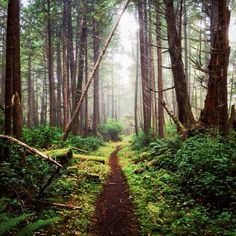 North Coast / Cape Scott Trail (northern tip of Vancouver Island, BC) by (@tomparkr) cr.c.