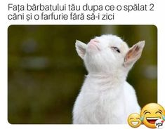 Bărbatul harnic - Viral Pe Internet Just Relax, Have A Laugh, Like A Boss, Laughter, Joy, This Or That Questions, Memes, Animals, Instagram