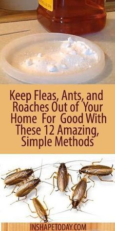 Fleas and ants! Thankfully haven't had to deal with roaches. Keep Fleas, Ants, and Roaches Out of Your Home For Good With These 12 Amazing, Simple Methods - InShapeToday Household Cleaning Tips, House Cleaning Tips, Cleaning Hacks, Household Products, Household Cleaners, Deep Cleaning, Household Pests, Kitchen Cleaning, Cleaning Recipes