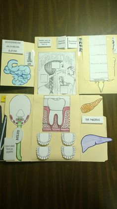 Here's our lapbook monster featuring Lesson 4: The Digestive System. InApologia's Exploring Creation with Human Anatomy and Physiology, they add in the Renal System. We're going to keep it sep...