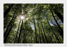 Wart ihr schon mal in Deutschlands einzigen Urwald? Der Nationalpark Hainich ist Natur pur und hat ziemlich viel zu bieten. Schaut selbst!