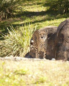Disney World | Animal Kingdom | Kilimanjaro Safaris