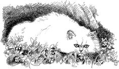 Persian Cat Pen and Ink Illustration Black / White Print