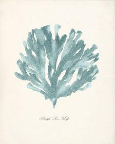 Pacific Sea Kelp Print No 1 - 8x10 in Sea Foam