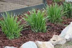 The Basics Of Mulch – What, How, Where, When and Why To Use