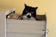 Tar dina katter lite väl mycket plats ibland? Här är 17 smarta inredningstips på hur du sorterar och organiserar dina lurviga vänner.