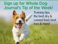 Prevent Your Dog From Suffering Heat Stress This Summer | Whole Dog Journal
