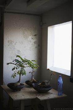 a cool quiet corner for bonsai
